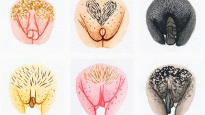 formatos-vulva